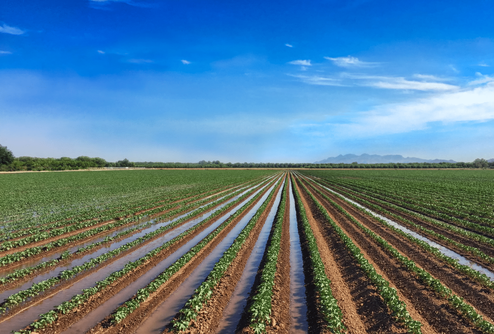high performance surface irrigation automation